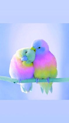 New Ideas Pastel Bird Wallpaper Baby Animals Super Cute, Cute Little Animals, Cute Funny Animals, Cute Dogs, Cute Birds, Pretty Birds, Beautiful Birds, Animals Beautiful, Bird Wallpaper