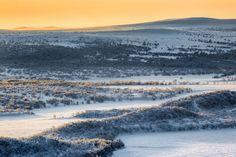 Arctic Lapland. Kevo Strict Nature Reserve, Finland . Jan 2014. by Tiina Törmänen