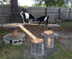 Goat playground | Goats 4 ranch