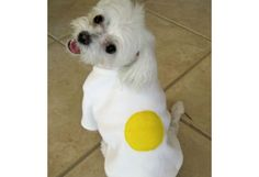 9 Food-Themed Pet Costumes for Halloween (Slideshow)