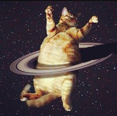 space cat runs rings around you Funny Cats, Funny Animals, Cute Animals, Fat Cats, Cats And Kittens, Crazy Cat Lady, Crazy Cats, I Love Cats, Cool Cats