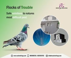 Awesome How to Repel Pigeons From Balcony
