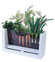 See-thru garden box. Awesome teaching idea to do with the kids!