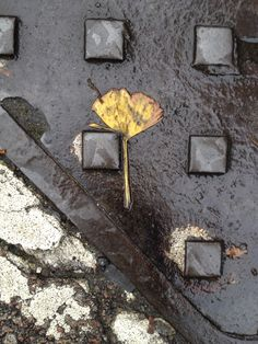 Street iron. Wet. Autumn. K street art with a difference...abstract inspiration