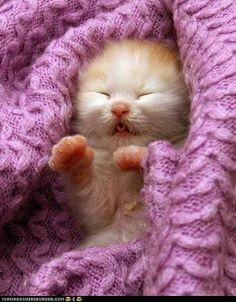 cute kitten! <3 <3 <3