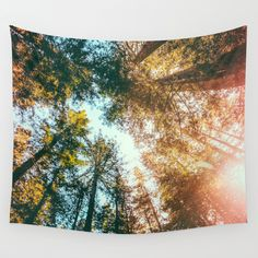 51x60 // $39 // over the bed tapestry California Redwoods Sun-rays and Sky Wall Tapestry