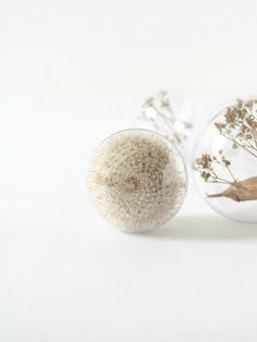 DIY Botanical Christmas Ornaments   Captivated Dried Cactus @monsterscircus