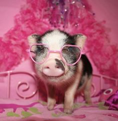 40 Pictures Of Pigs Celebrating The Bacon Shortage