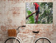 Discover «Scarlet Macaw», Numbered Edition Canvas Print by Paula Oliveira - From $49 - Curioos