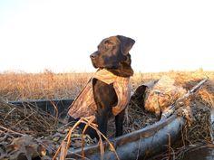 Hunting, hunting, hunting