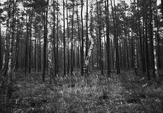 #blackandwhite  #forests  #blackandwhiteforest #like4like