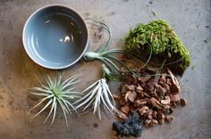 "5 Inspiring (& Easy!) DIY Indoor Gardens    #refinery29  http://www.refinery29.com/urban-gardening#slide25  Trover's Must-Have Components For Successful Air Plants Container: Something shallow such as a hermit bowl. Preserved Moss and Orchid Bark: They give the container a base, and although air plants are happy to sit on their own, this grounds them and makes them a ""thing"" instead of appearing to be ""plants in a bowl."" Air Plants: This type of plant should be submerged in water once a ..."