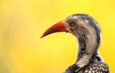 Colorful Red Billed Hornbill by Anja Gröbel on 500px