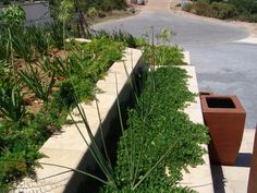 Window boxes capped with Double Round Edged Flagstone Pavers in Colour Sandstone. Flagstone Pavers, Window Boxes, Best Web, Sidewalk, Exterior, Windows, Colour, Plants, Home