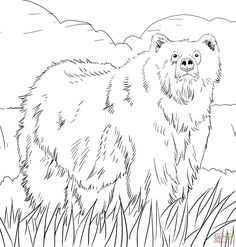 Alaskan Grizzly Bear Coloring Page From Brown Bears Category Select 26077 Printable Crafts Of Cartoons Nature Animals Bible And Many More