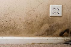 Is Your Home a Death Trap? #mold #mildew
