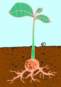 On this page, you will learn what the different parts of a plant are and what they do for the plant. Be fore we read, let's think about some helpful key words that we can look for on this page. Library Lesson Plans, Library Lessons, Library Ideas, Library Research, Research Skills, Teaching Science, Social Science, Teaching Ideas, Elementary School Library