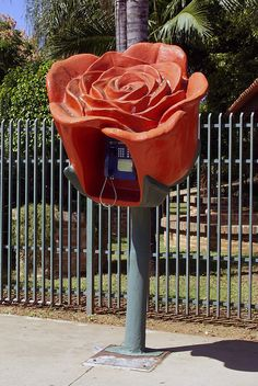 Rose phone booth in brazil