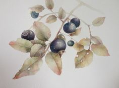 Tu recepcja - Botanical art by Marina Pravnik