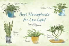 7 Recommended Houseplants for Low-Light Conditions
