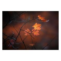 Photography / Autumn ❤ liked on Polyvore featuring backgrounds