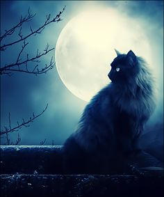 A Witch's Black Cat at Night With a Full Moon.