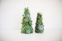 succulent mini Christmas trees