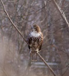 I saw this one in Crothers Woods (Don River valley) yesterday afternoon.   I'm just a beginner, so I would love if someone could help me identify it.