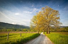 Hyatt Lane in Spring - Cade's Cove GSMNP - An early morning scene during the fresh and vivid colors of early spring along Hyatt Lane in Cade's Cove, located in the Great Smoky Mountains National Park in eastern TN. The warm light of the early morning sun lit this shot wonderfully, and the combination of the daytime moon, fluffy clouds rolling over the mountain tops, and a herd of deer in the distance really made this scene something special.  Can't wait to visit the GSMNP again!  Hope you…