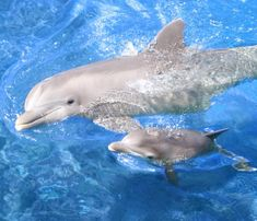 Mummy dolphin and baby dolphin