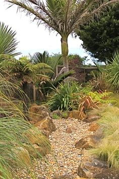 Mix of hard and soft landscaping Evergreen Shrubs, Trees And Shrubs, Back Gardens, Small Gardens, Garden Landscape Design, Garden Landscaping, Planting Plan, Small Ponds, Garden Images