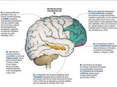 """Le réseau de milliards de neurones présent dans notre cerveau n'est pas """"immobile"""". Pendant l'enfance, certaines connexions, moins utilisées, disparaissent tandis que d'autres fibres se renforcent en s'entourant de gaine de myéline."""