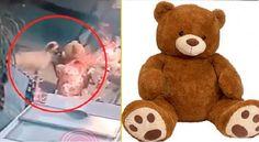 El video viral muestra el preciso instante en que un perrito roba un oso de peluche el Día de San Valentin. Teddy Bear, Toys, Gift Exchange, Valentines, Plushies, Funny, Animales, Activity Toys, Clearance Toys
