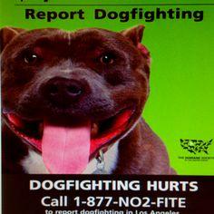 Report Dog Fighting