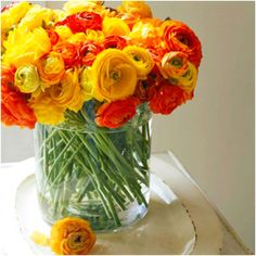 Golden Yellow, Mango Orange, Blood Red. Wedding Colors :)