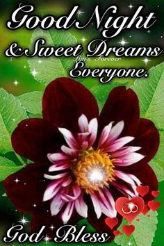 🌙 શુભરાત્રી - Good Night & Sweet Dreams Forever overyone . God Bless - ShareChat Good Night Sweet Dreams, Blessed, God, Dios, Allah, The Lord