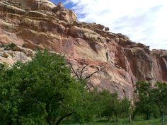 Orchards planted by Mormon pioneers in the 1800s in Fruita, Utah at Capitol Reef National Park. Best apples I've ever tasted!