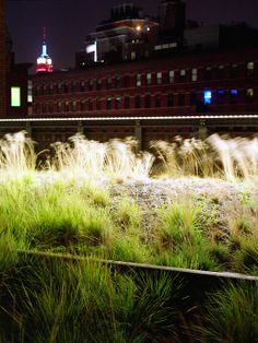 High Line, New York   James Corner Field Operation and Diller Scofidio + Renfro; Photo © Agnese Sanvito   Archinect