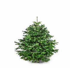 Weihnachtsbäume für Geschäftskunden? dayzzi macht es möglich! Einen Tannenbaum schenken heisst Weihnachten schenken.