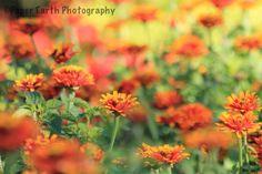 DOF Pretty Pictures, Flower Power, Earth, Flowers, Plants, Photography, Cute Pics, Photograph, Fotografie