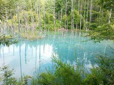 The Blue Pond, Biei town, Hokkaido, Japan