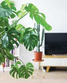 Il y a plein de bonnes raisons de garnir son intérieur de plantes vertes : leur aspect décoratif, bien sûr, leur côté apaisant, mais aussi leurs bienfaits pour la qualité de l'air à la maison ! En plus de renouveler l'oxygène, certaines d'entre elles sont réputées pour leur action dépolluante: elles élimineraient les composants volatilesLire la suite…