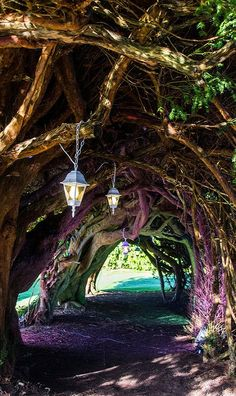 Yew Tunnel at Aberglasney Gardens, Wales (by Eiona. R.) Take meeee!  I want one... I had better plant now.. Maybe my grand kids would enjoy it. X)