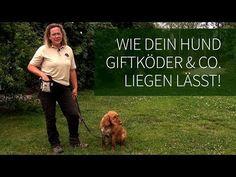 Hundetraining ► Anti Giftköder Training ► Wie Dein Hund Giftköder & Co. liegen lässt! - YouTube