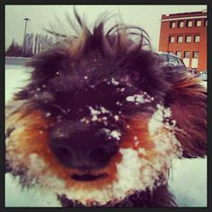 Maggie in the snow