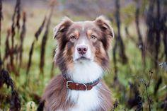 Hundehalsbänder bei MIKKIS für Ihren Liebling!  Handgemachte elegante & sportliche Halsbänder exklusiv bei MIKKIS.  #dog #instadog #hundeliebe #dogstagram #doglover #dogphotography #puppy #hundefotografie #dogs #hundträning Corgi, Animals, Colour Pattern, Products, Corgis, Animales, Animaux, Animal, Animais