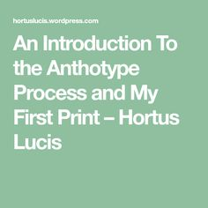 An Introduction To the Anthotype Process and My First Print – Hortus Lucis
