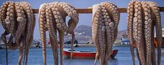 Amazing Catching Big Octopus in The Sea, Giant Octopus Fishing Process - Octopus Artwork, Octopus Pictures, Octopus Painting, Greek Meze, How To Catch Crappie, Red Octopus, Aqua Culture, Dragon Figurines, Fishing Techniques