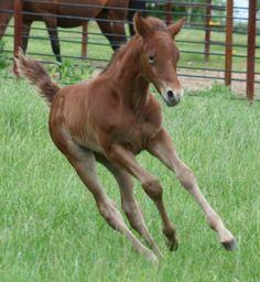 Foal in motion