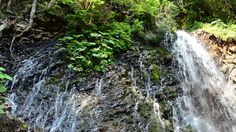 Falls in mountains. #falls #park #rainforest #green #view #water #wild #natural #national #tropical #river #stormy #amazing #wonder #power #flow #brown #destinations #valley #majestic #ecology #clean #clouds #sightseeing #waterfall #famous #strength #wilderness #blue #mist #beauty #overcast #sky #scenic #tourism #scene #nature #large #environment #big #splash #landscape   #Video #footage #stock #pond5